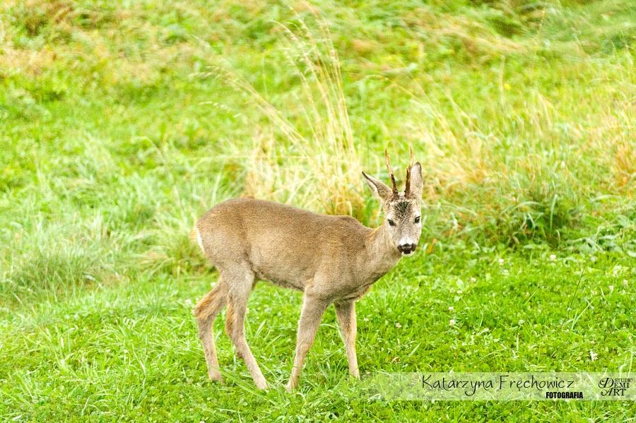DSC_1099 Zdjęcia natury
